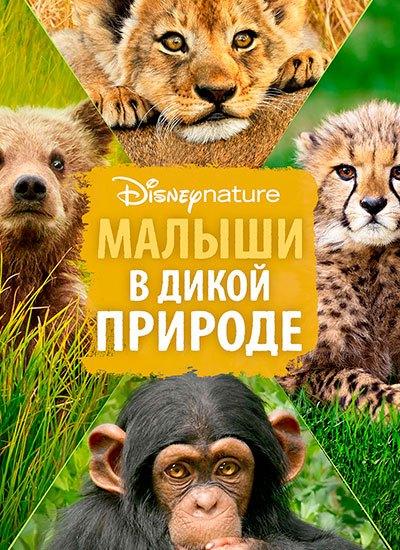 что посмотреть с ребенком:фильм малыши в дикой природе