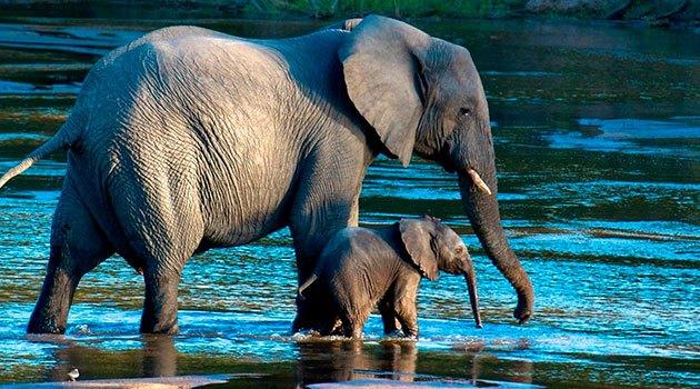 что посмотреть с ребенком: фильм пасека-пасхальный слоненок